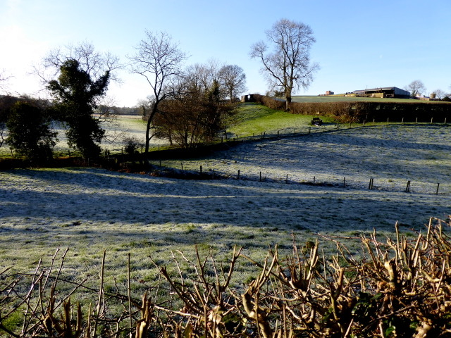 Frosty at Lissan