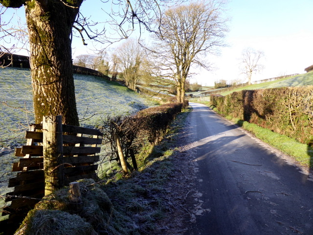 Frosty, Lissan