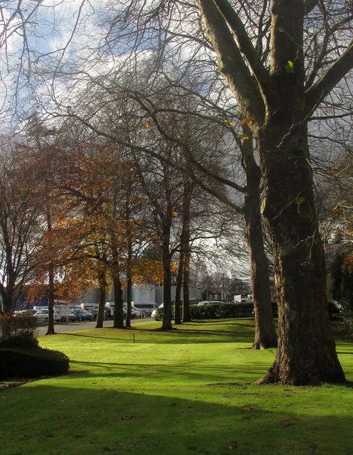 Trees by Torbay Hospital