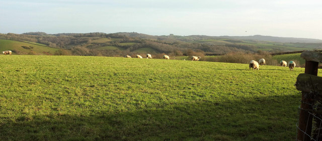 Sheep near The Grange