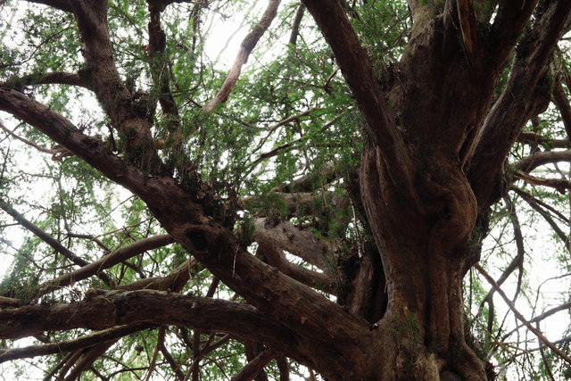 Selsdon Wood