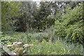 TQ2669 : Overgrown pond by N Chadwick