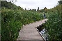 TQ2668 : Boardwalk, Morden Hall Park by N Chadwick