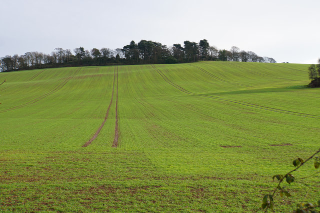 Emerging crop near Brockhurst Farm