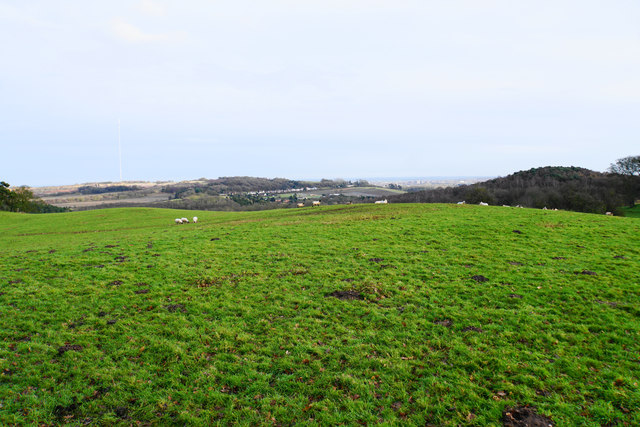 Sheep on Gorsey Hill