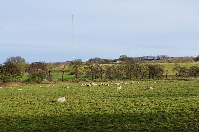Sheep near Bourne House