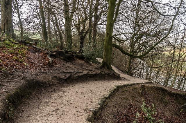 Wandsworth Wood