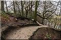 SE0854 : Wandsworth Wood by Ian Capper