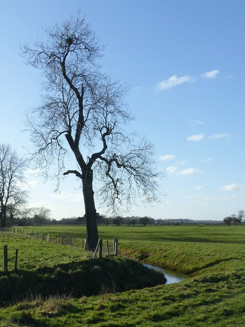 Tree and drain alongside the Midshires Way