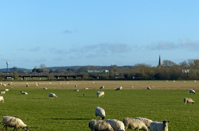 Grazing sheep and the M1