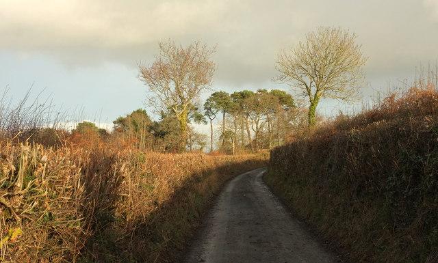Lane near Oxenpark Plantation