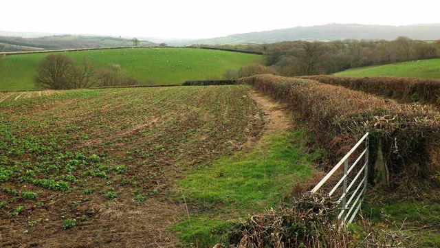 Farmland by Staddon Road