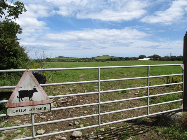 Cattle crossing gate at Carrstown Organic Farm