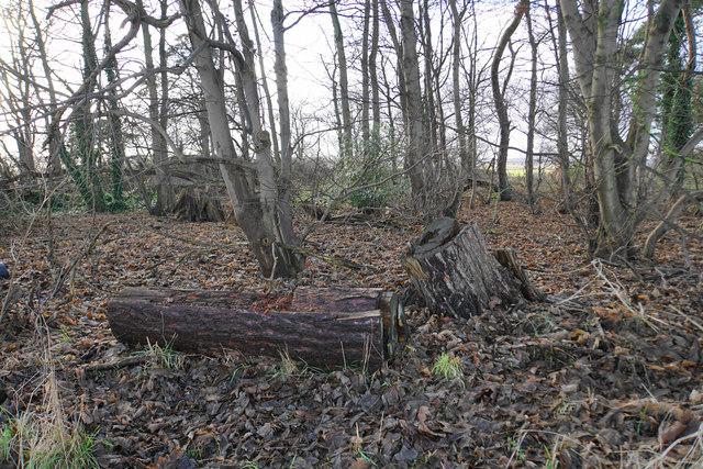 Small wood by the Heart of England Way