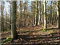 NT8141 : In Dunglass Wood : Week 2