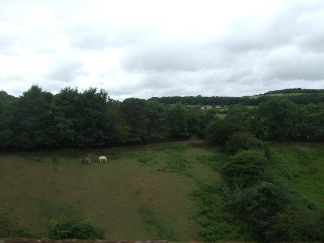 Hillside grazing near Coombe