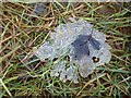 SO9539 : A hawthorn leaf on ice by Philip Halling