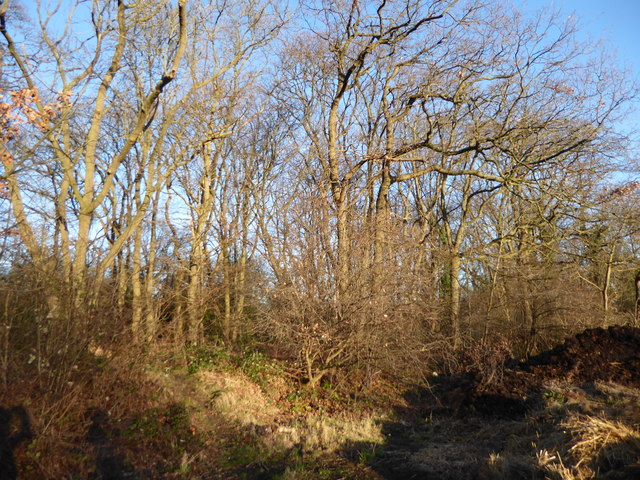 Woods next to the former abattoir site on Woodlands Farm