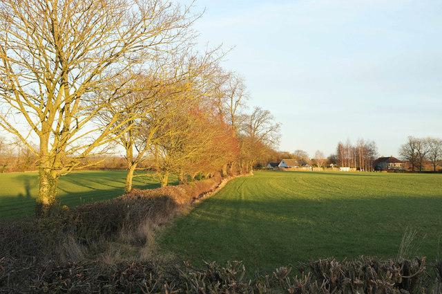 Trees along field boundary, Park Green