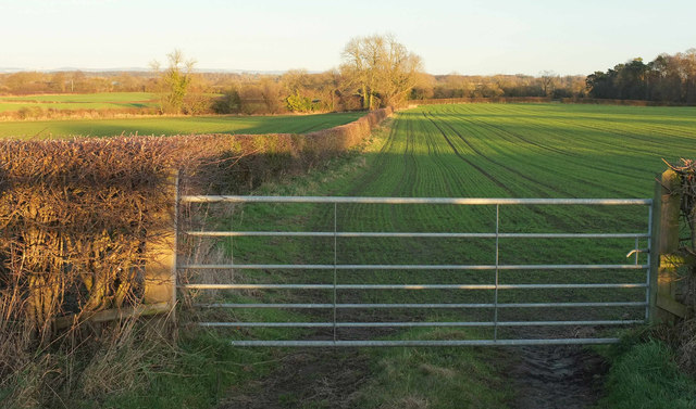 Winter crop by Knaresborough Road