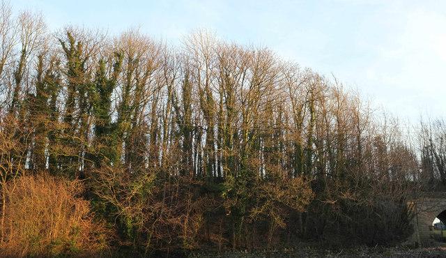 Old railway embankment, Low Demains