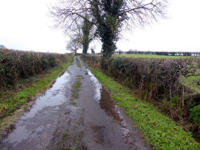 Wet along Todds Road