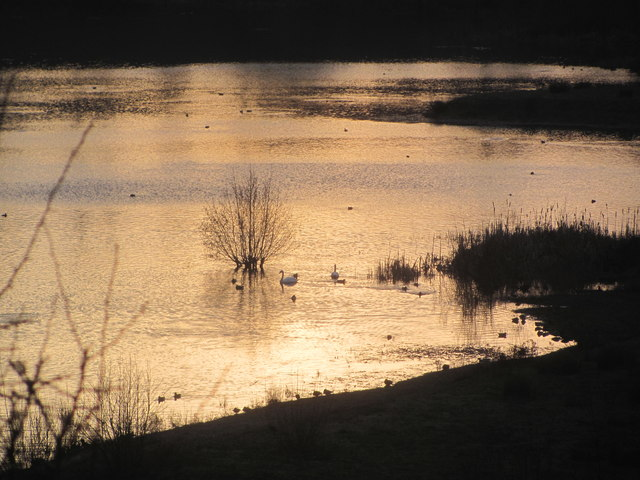 Winter Sunlight on the Marsh at College Lake