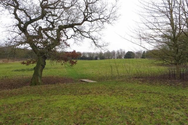 Footbridge by an oak
