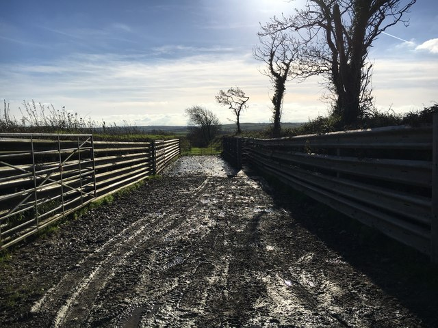 Cattle Handling Area