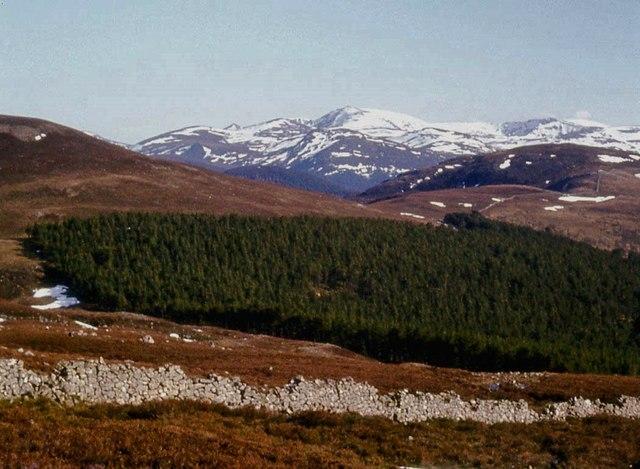 Moor, forest and Lochnagar