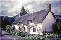 SS9843 : Thatched Cottage in Park Street, Dunster by Jeff Buck