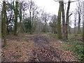 SP8800 : Part of Atkins Wood near Prestwood, Bucks by Jeremy Bolwell