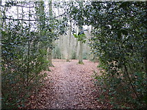 SP8800 : Path in Angling Spring Wood near Great Missenden, Bucks by Jeremy Bolwell