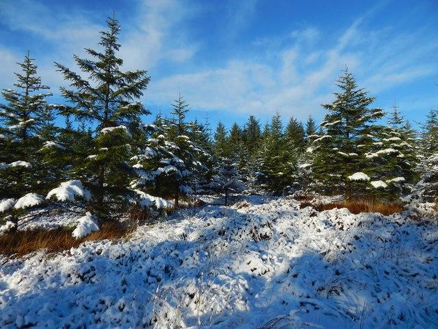 Woods on Pappert Hill