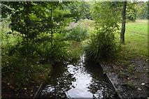 TQ2668 : Distributary of the River Wandle by N Chadwick