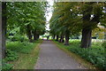TQ2668 : Wandle Trail, Morden Hall Park by N Chadwick