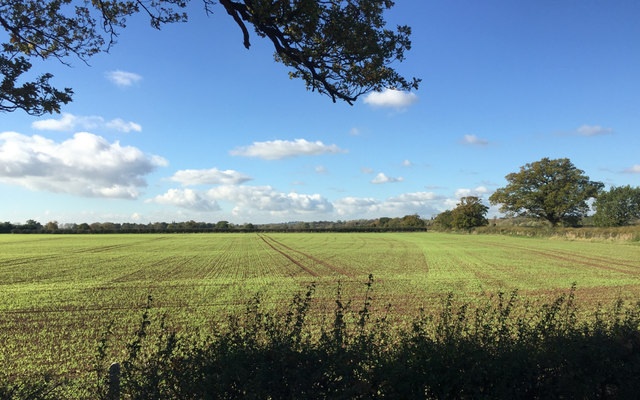 Autumn-sown crop emerging, field north of Wellesbourne