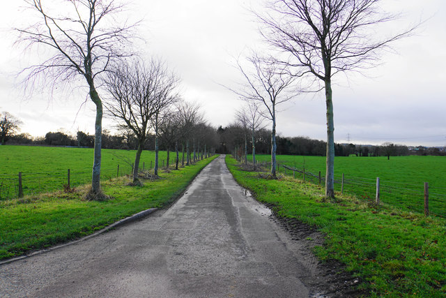 Tree-lined drive to Freeford Manor