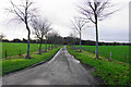 SK1307 : Tree-lined drive to Freeford Manor by Bill Boaden