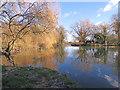 TL4355 : Grantchester millpond in winter : Week 3