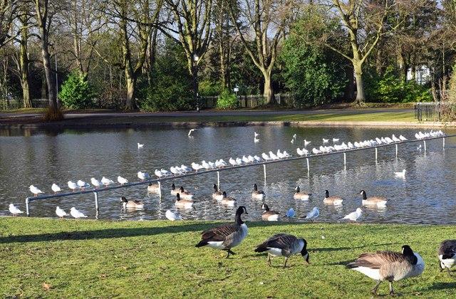 Bird paradise at Cannon Hill Park, Edgbaston, Birmingham