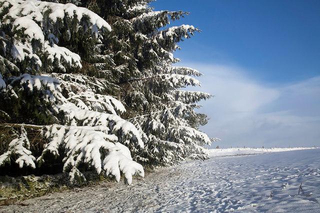 A field-woodland boundary on Blaikie's Hill