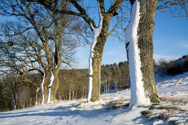 Winter trees at Ladhope Golf Course