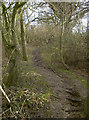 ST6760 : Small thicket on Priest Barrow by Neil Owen