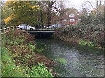 SU4619 : River Itchen by Shaun Ferguson