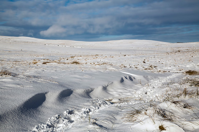 Ladhope Moor in winter