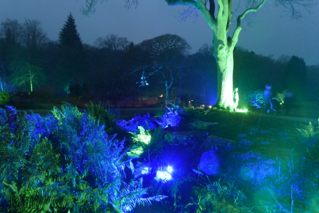 Illuminations in Harlow Carr