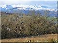 NS4385 : Duncryne woodland by Thomas Nugent