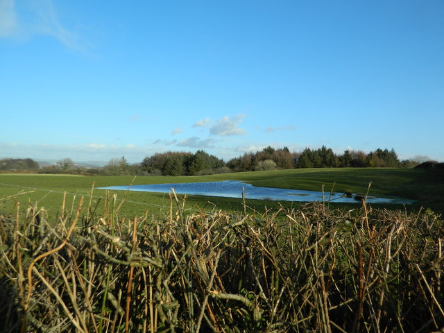 Grassland and pond, Newforest House Farm