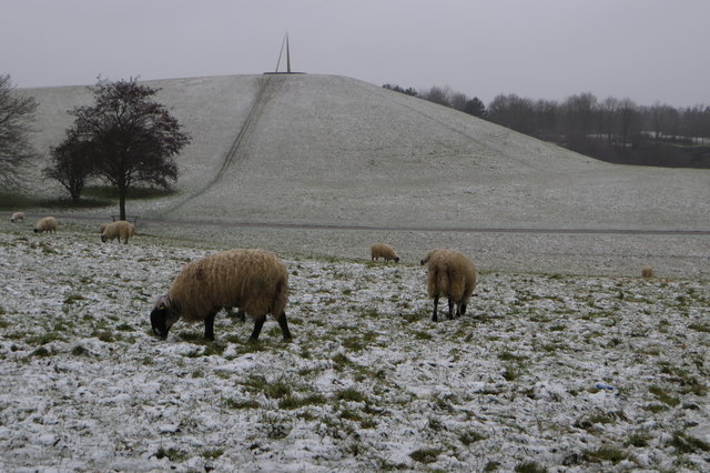 Cold sheep in Campbell Park